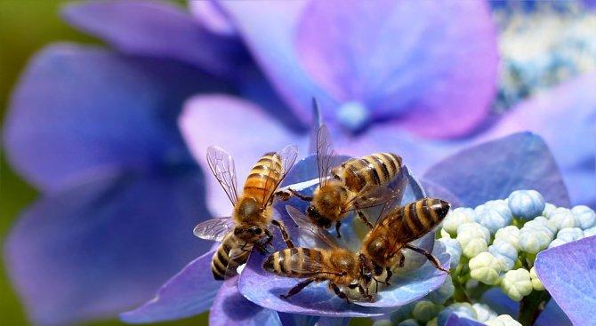 През 2017 г. има 70% усвояемост по Националната програма за пчеларство