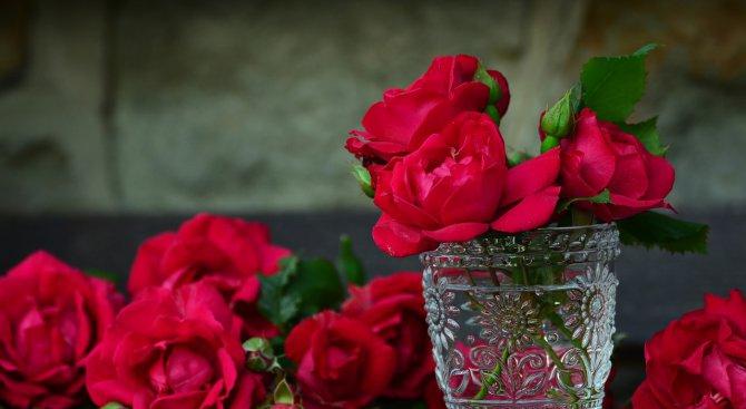 Цената на червената роза рязко скача