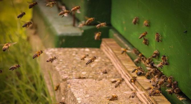 Пчелари настояват за увеличено подпомагане на дейността им