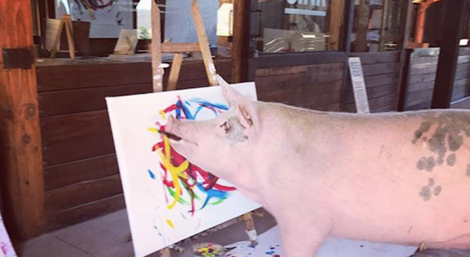 Прасе рисува картини