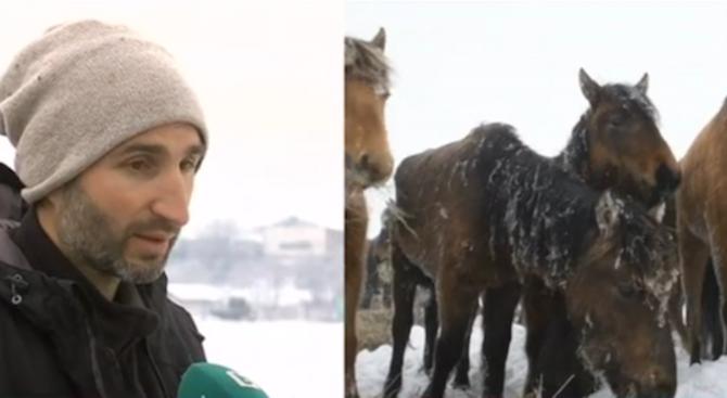 Близо 260 000 лева субсидии е получил за 5 години собственикът на мъртвите коне