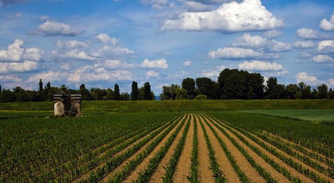 Инвестициите в земеделска земя се разрастват