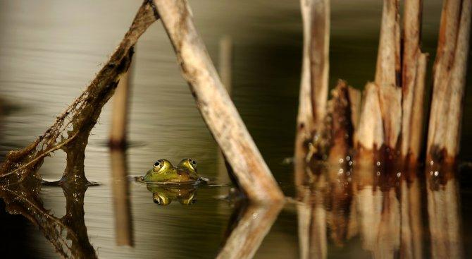 Нов вид жаби беше открит в Южна Америка