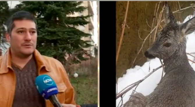 Спасителят от Бояна: Сърната беше в устата на едно куче