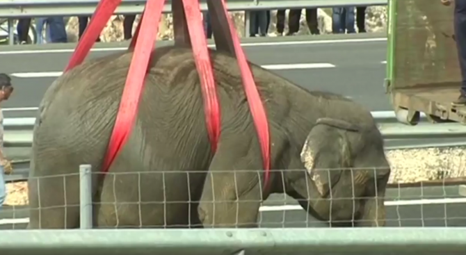 Слонове блокираха магистрала в Испания (видео)