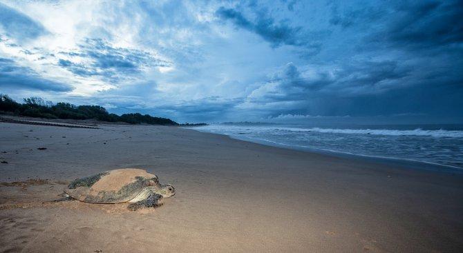 Нови животински видове бяха открити в морето край брега на остров Ява