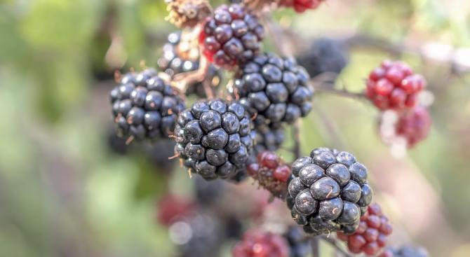 Суровите плодове и зеленчуци предотвратяват депресията