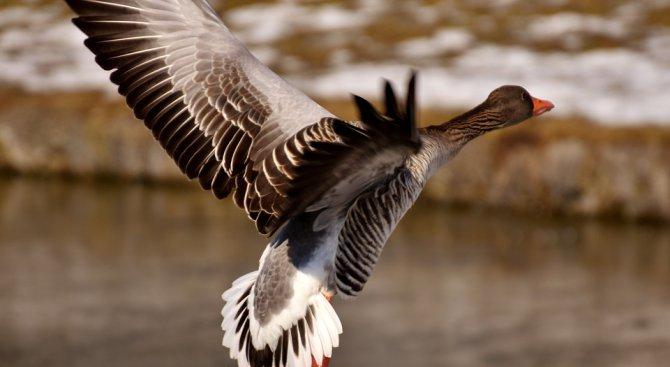 Засякоха гъска с превишена скорост
