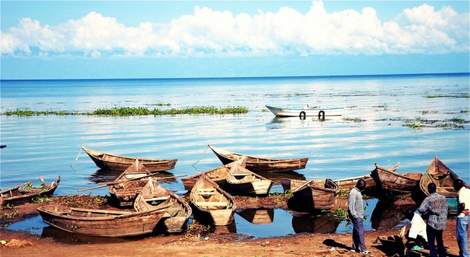 Три четвърти от видовете в езерото Виктория са застрашени от изчезване