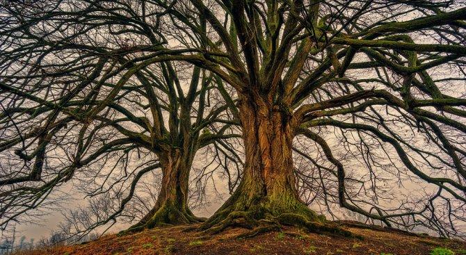 Учени: Горите растат заедно с човешкото щастие