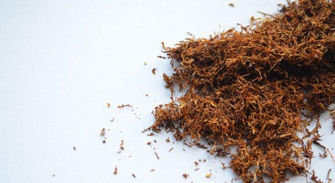 Откриха тютюн без бандерол във Видин