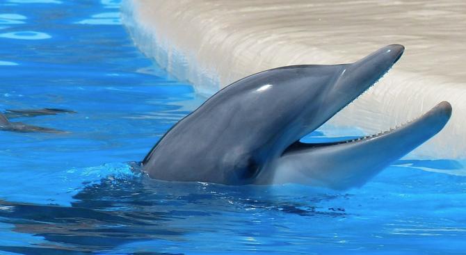 Учени измериха щастието на делфини в аквариум