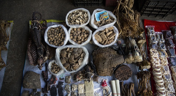 Интерпол конфискува над 30 000 диви животни, станали жертва на контрабанда