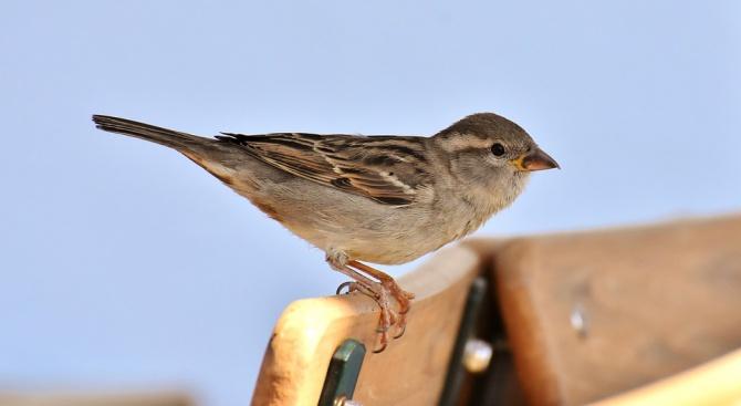 ЧЕЗ стартира проект за опазване на живота на птиците