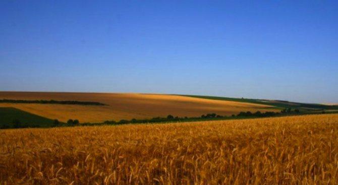 Зърното в Монтанско се изкупува по 240-260 лева за тон