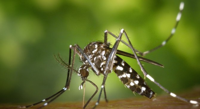 Британски лекар: Витамин В12 срещу ухапване от комари