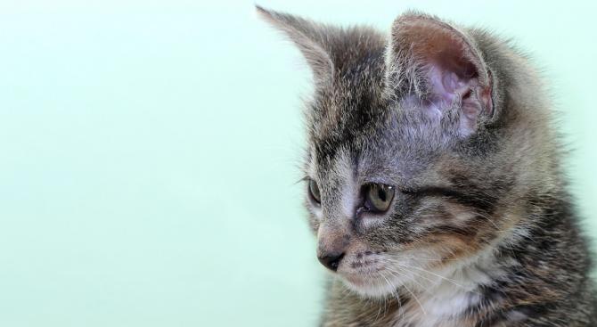Пожарникари спасиха котка в Свиленград