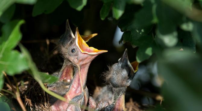 Експерти на РИОСВ-Шумен са се погрижили за 12 бедстващи птици