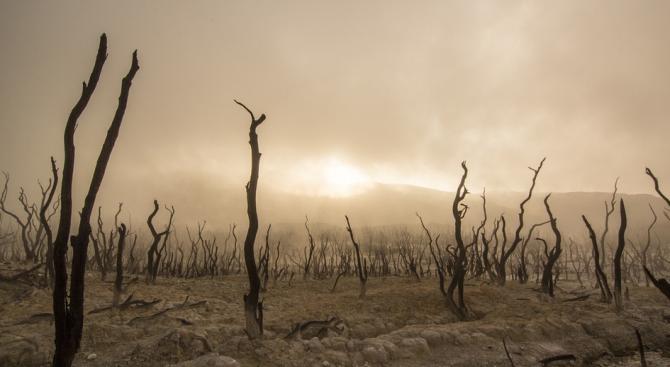 Първите животни на Земята са предизвикали глобално затопляне
