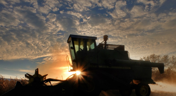 Близо 300 комбайна прибират зърнената реколта в Добричка област