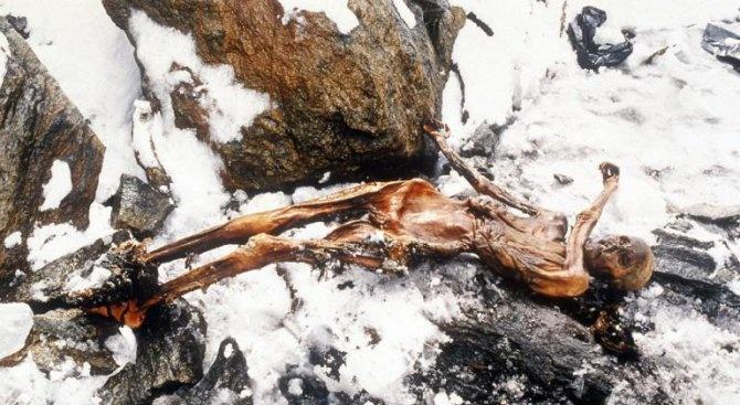 Учени разкриха каква е била последната храна на ледения човек Йоци -  Любопитно - Novini.bg