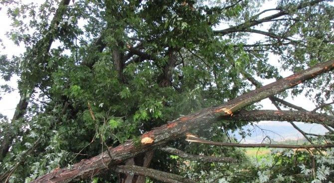 Дърво падна върху детска площадка във Варна