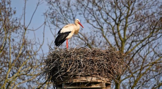 Спасиха 15 птици от защитени видове