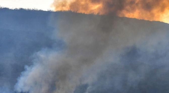 Гръцките пожари запалиха битка между медии и Атина