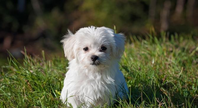 Предлагат кучетата в Пловдив да се разхождат с памперси