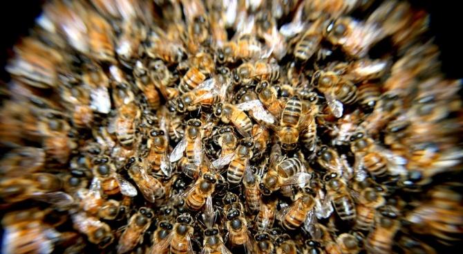 """20 000 пчели всяха паника на нюйоркския площад """"Таймс Скуеър"""" (видео)"""