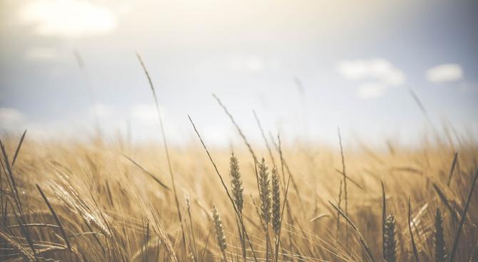 В Плевенска област 210 земеделци не са подали годишна данъчна декларация