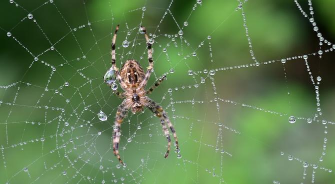 Паяците имат английска точност