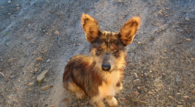 Пожарникари спасиха куче, паднало в шахта в Попово