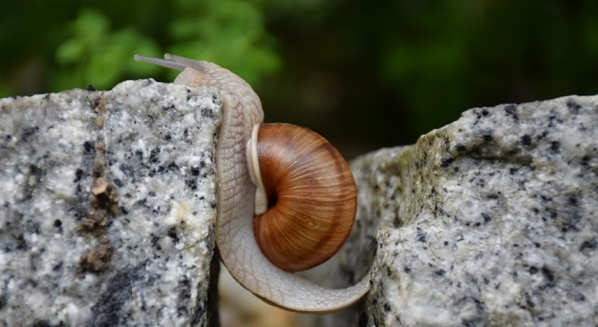 Палеонтолози представиха най-стария охлюв, запазен в кехлибар