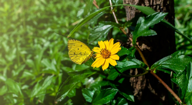 Учени установиха намаляване на насекомите в Карибския регион