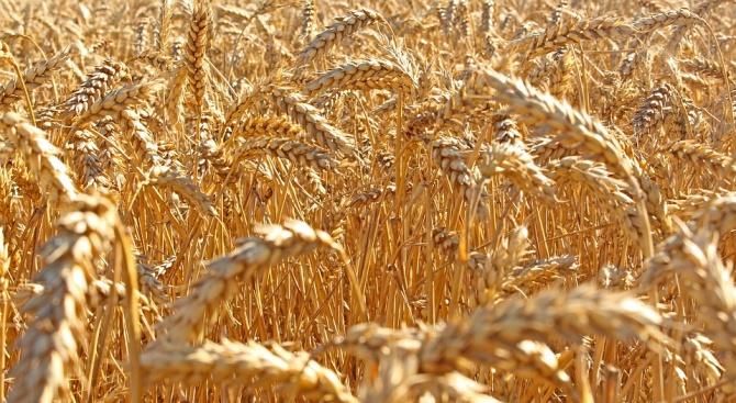 34-годишен мъж от В. Търново е обвинен в измама на двама земеделски производители
