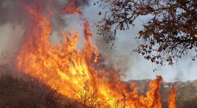 Броят на жертвите на горските пожари в Калифорния продължава да расте (обновена)