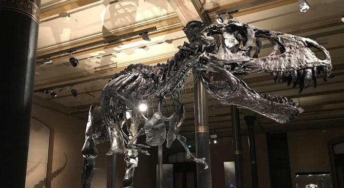Зала с динозаври ще има в Природонаучния музей в Пловдив