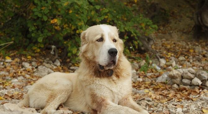 62-годишен уби три породисти кучета с ловна пушка