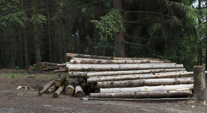 Задържаха 4 каруци с незаконна дървесина