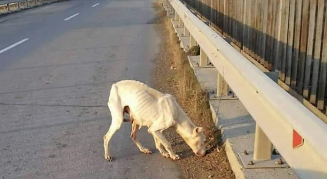 Млада жена пропътува 120 км, за да спаси изоставено куче (снимки)