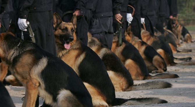 Търсят с кучета и хеликоптер мъжа, намушкал три жени в Нюрнберг