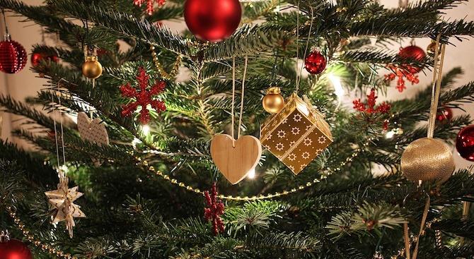 Коледната елха крие гъбички, които са отговорни за развитието на пневмония и бронхит