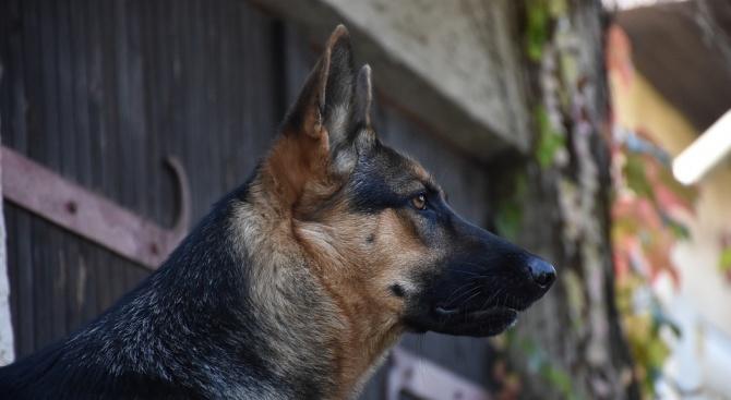 Кучета нахапаха млада жена в разградско село