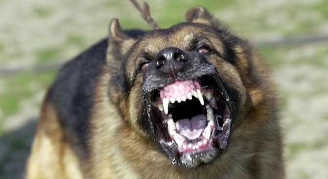 Кучета нахапаха дядо в Благоевград