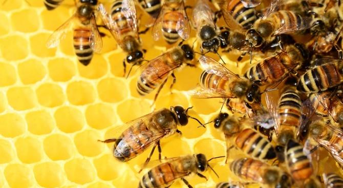 От 4 до 28 февруари изплащатсредствата на пчеларите по държавнатапомощ de minimis