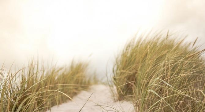 """Унищожените дюни на """"Смокиня"""" са в територията на частни имоти"""
