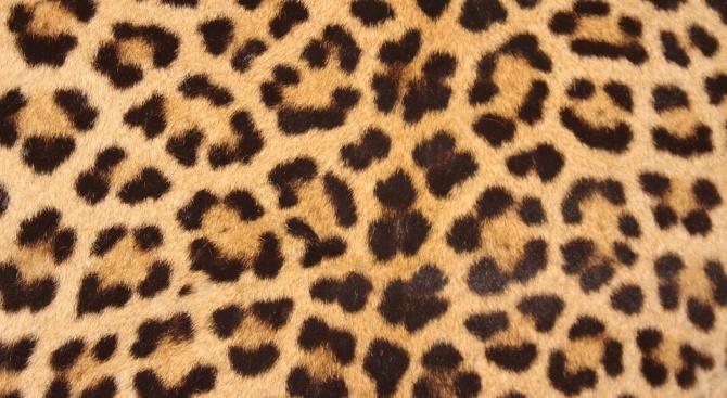 Леопардовата окраска ще бъде следващият моден тренд в мъжките прически (снимка)
