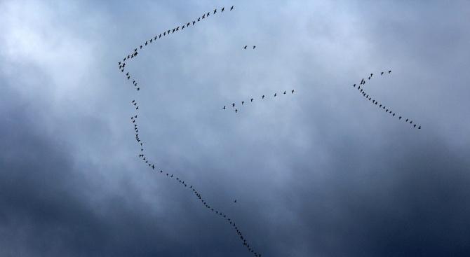 Затоплянето на времето е засилило миграцията на прелетните птици в страната