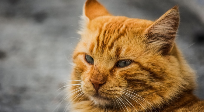 Изрод трови улични котки в Пловдив (снимки 18+)